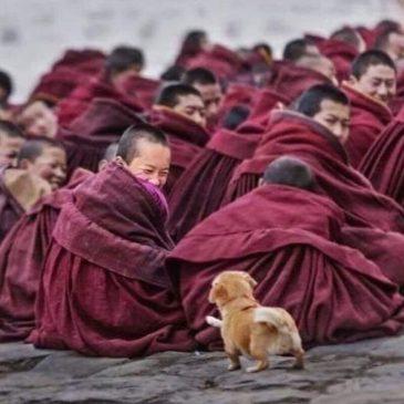 Буддийские пословицы и поговорки