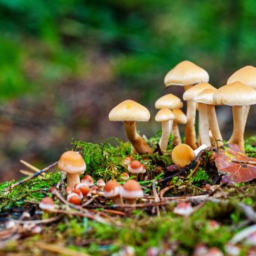 5 удивительных фактов о грибах