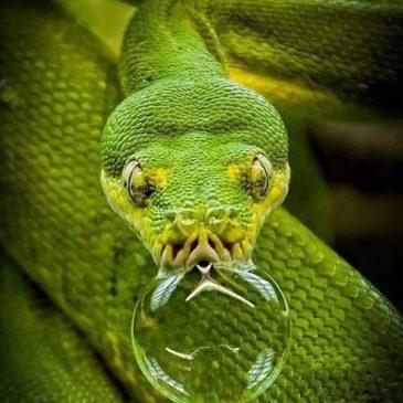 Испытания змеёй. Даосская притча