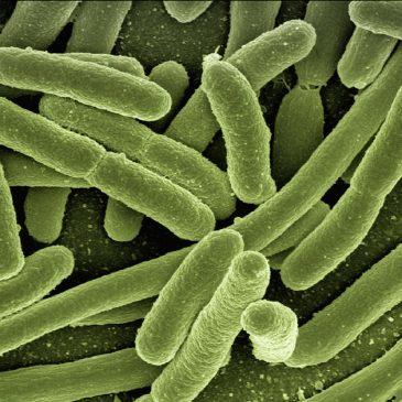 Микрофлора: как бактерии в кишечнике влияют на здоровье