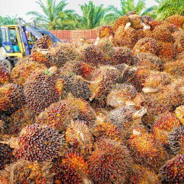 Правда про пальмовое масло