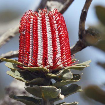 Растение, которое размножается при помощи огня
