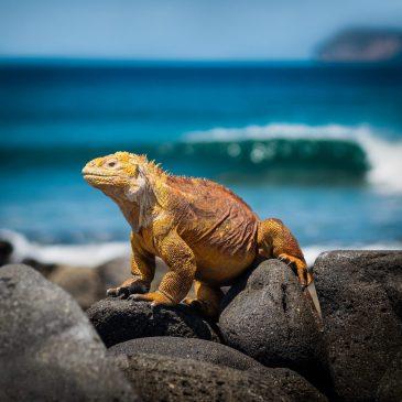 Морские жители Галапагосских островов