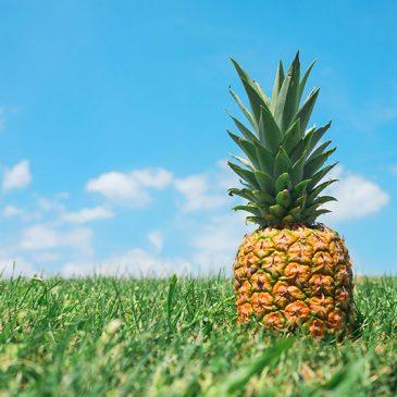 Pinatex — экокожа из ананасов 🍍