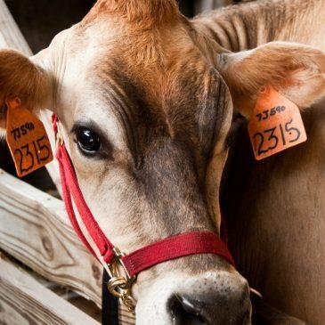 Красота из отходов животноводства — гиалуроновая кислота