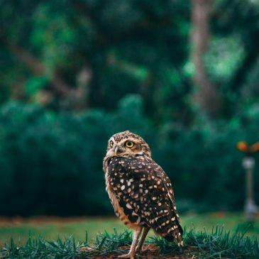 Изумительные совы