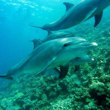 Дельфины и человек 🐬