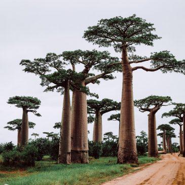 Символ острова Мадагаскар