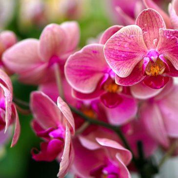 Целительная сила орхидеи