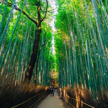 Бамбуковый лес — Сагано