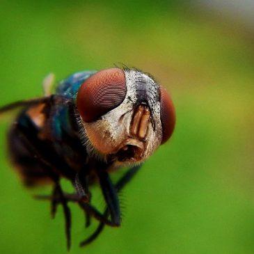 Потому и не кусают! Все о насекомых и средствах защиты