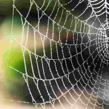 Даосская притча: Паучьи сети